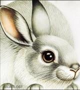 Slikovnice likovi životinja: Poljski zec