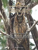 Urbana dama - Fenomen zimovališta sove male ušare u gradovima Sjeverne Bosne i Hercegovine