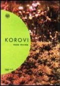 Korovi