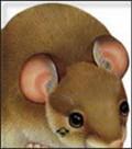 Miš - slikovnice životinja