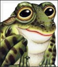 Žaba - slikovnice životinja