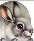 Zec - slikovnice životinja