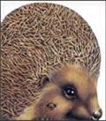 Jež - slikovnice životinja